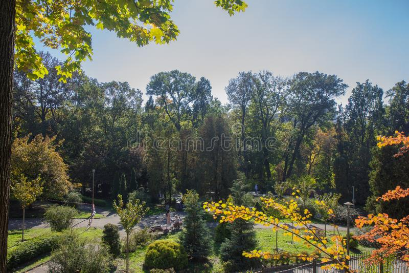 Paisagem de Autumn October árvores desiduous coloridas - opinião ensolarada do outono Jardim botânico da universidade acadêmico d fotos de stock