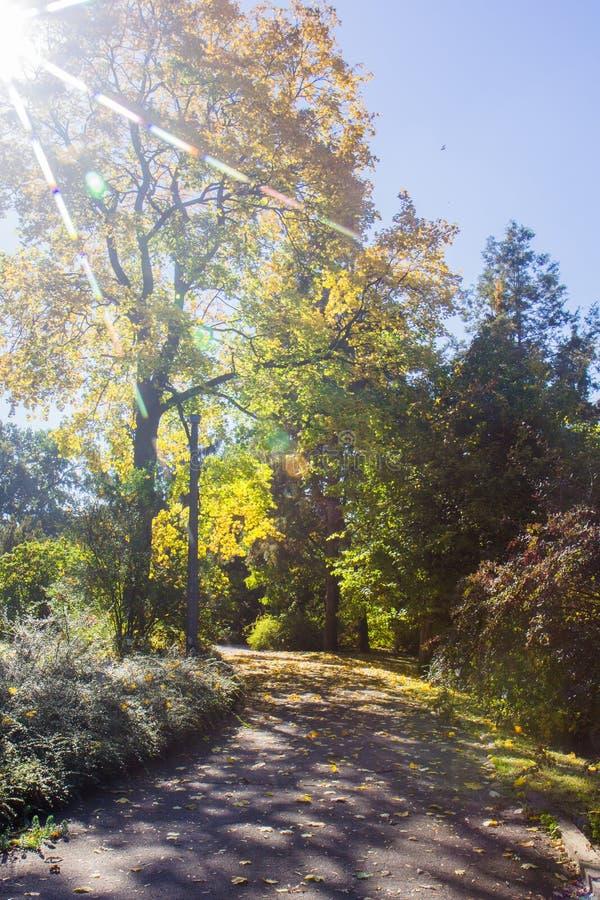 Paisagem de Autumn October árvores desiduous coloridas - opinião ensolarada do outono Jardim botânico da universidade acadêmico d foto de stock royalty free