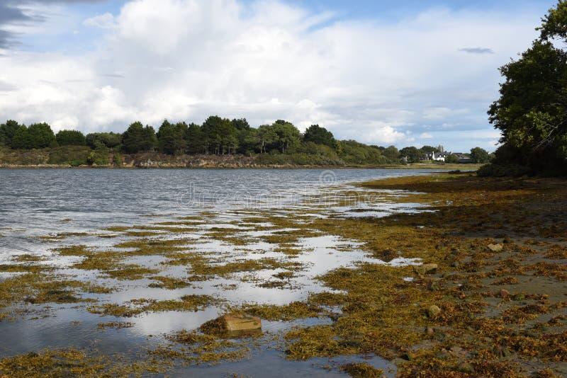 Paisagem de Brittany no golfo de Morbihan, pântano com seewead imagem de stock royalty free