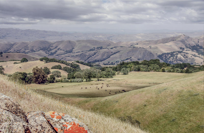 Paisagem de Califórnia do norte Região selvagem regional de Sunol-Ohlone foto de stock royalty free