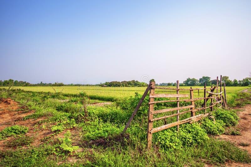 A paisagem de campos do arroz encheu-se com o arroz em rural foto de stock royalty free
