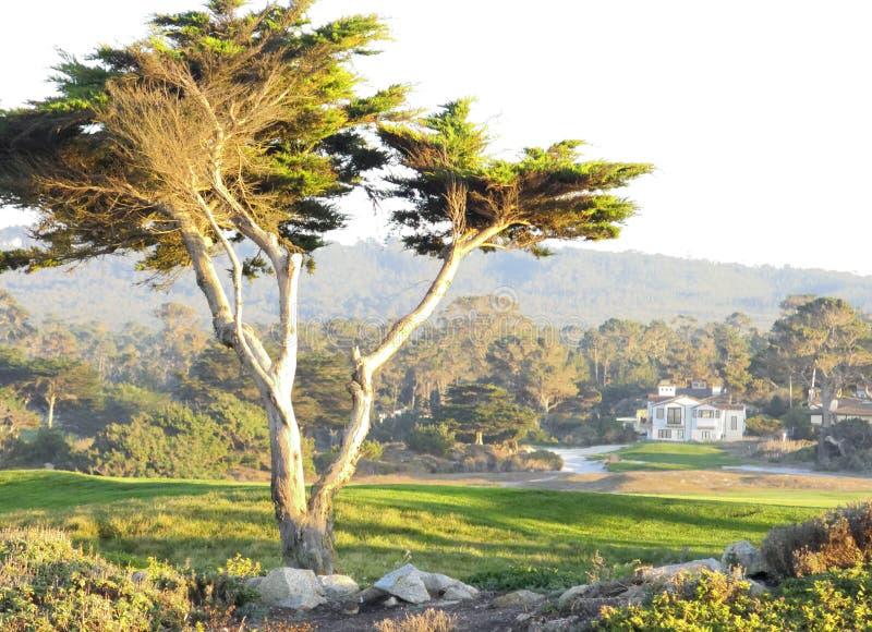 Paisagem de Carmel em Califórnia fotos de stock royalty free