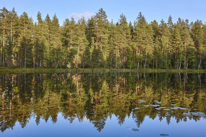 Paisagem de Finlandia com lago e floresta no por do sol imagem de stock