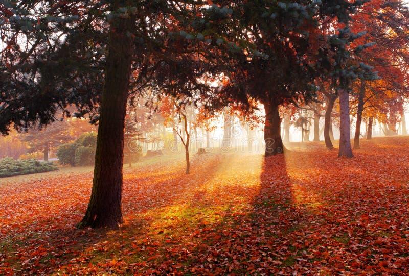Paisagem de Forest Park do outono fotografia de stock