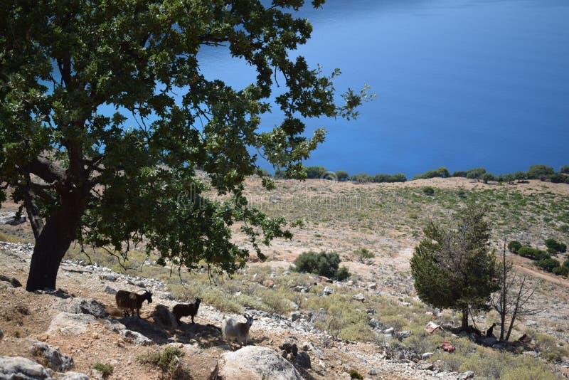 A paisagem de grande cênico com as cabras está na máscara imagem de stock