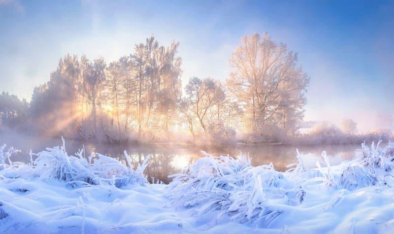 Paisagem de inverno A geada do inverno à luz do sol da manhã Árvores e plantas cobertas por geada de arcos Mist sobre rio ilumina imagem de stock royalty free