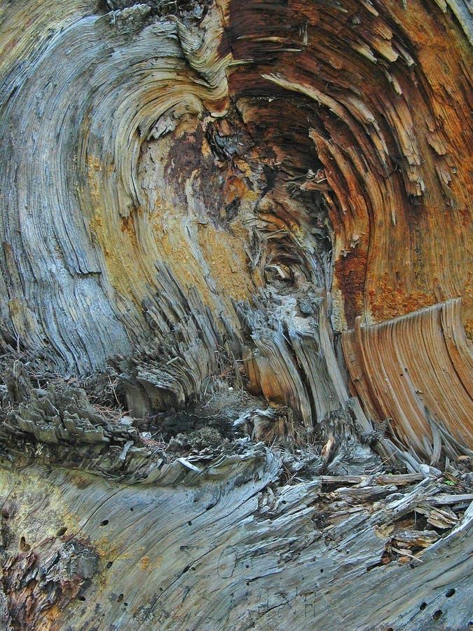 Paisagem de madeira foto de stock