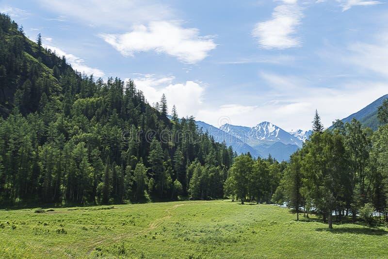 A paisagem de montanhas de Altai com o cume do norte-Chuya no fundo, no verão, Sibéria, república da montanha de Altai foto de stock