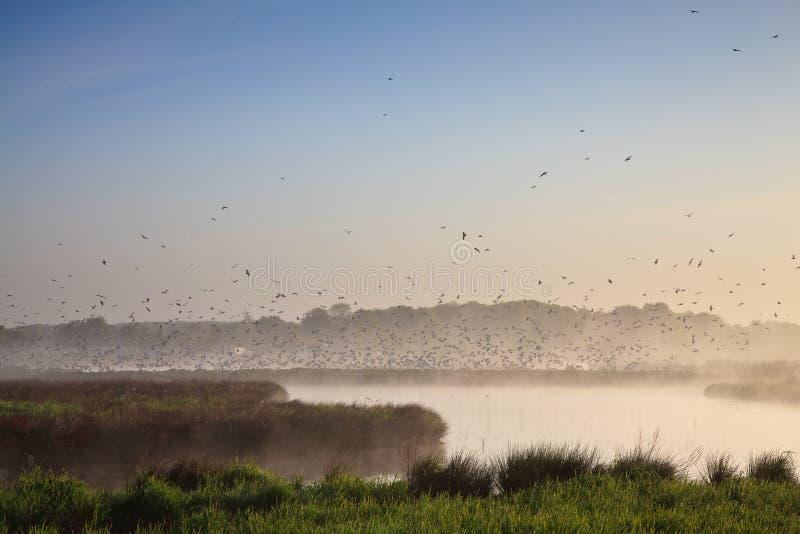 Paisagem de Moring com lotes dos pássaros fotografia de stock royalty free