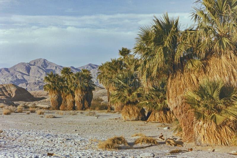 Paisagem de oásis de dezessete palmas no parque do deserto de Anza Borrego em 1990 imagem de stock