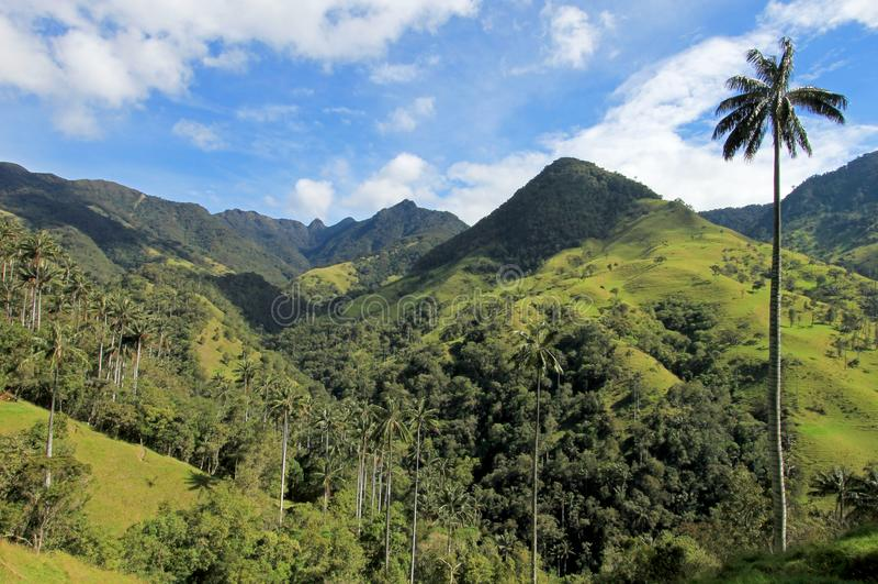 Paisagem de palmeiras da cera no vale de Cocora perto de Salento, Colômbia imagem de stock