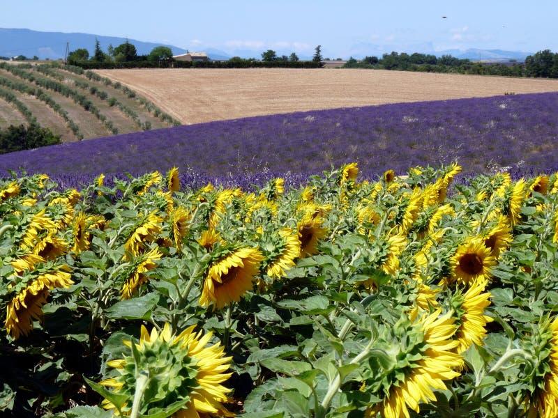 Paisagem de Provence fotografia de stock