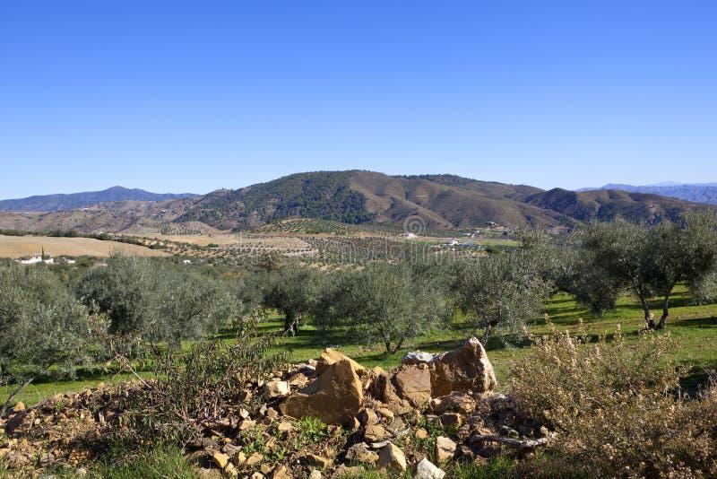 Download Paisagem De Rocky Andalusian Com Montanhas Foto de Stock - Imagem de campo, cultivation: 107528590