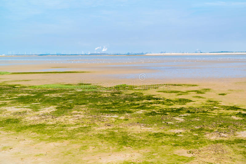 Paisagem de Sandflat da reserva natural perto de Maasvlakte e de Rotterd imagem de stock royalty free