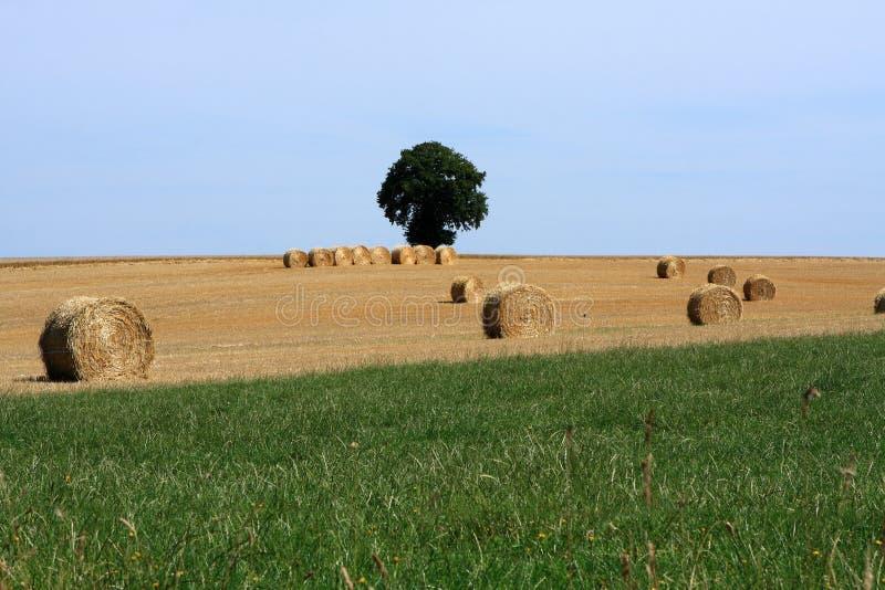 Paisagem de Straw Bales In Rural French fotografia de stock