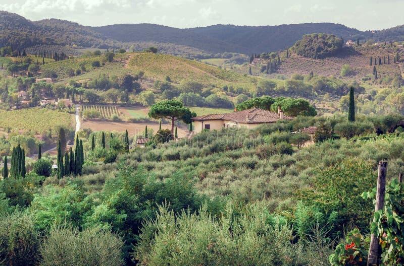 Paisagem de Toscânia com árvores do jardim, mansão, os montes verdes e os pinhos Campo italiano na província de Siena fotos de stock