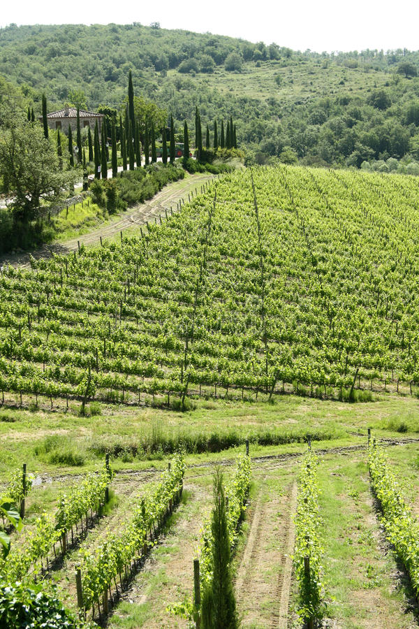 Paisagem de Toscânia (Itália) fotografia de stock royalty free