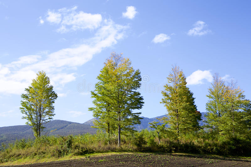 Paisagem de Tsumagoi do outono adiantado em Japão foto de stock royalty free