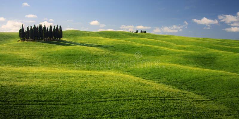 Paisagem de Tuscan com Cypress e o céu azul fotos de stock