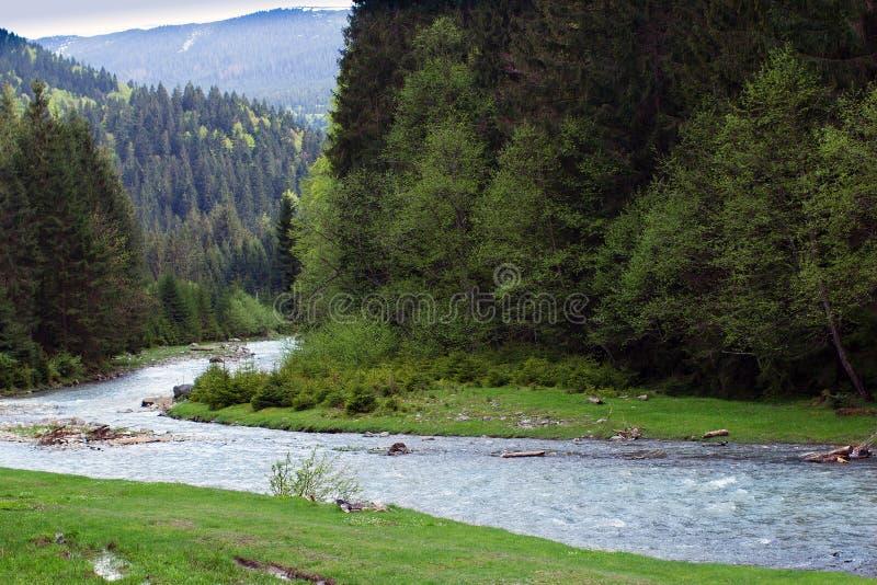 Paisagem de um rio entre montanhas de Carpathians com abeto foto de stock