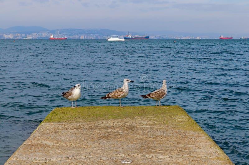 Paisagem de uma gaivota marítima sobre fundo do mar imagens de stock
