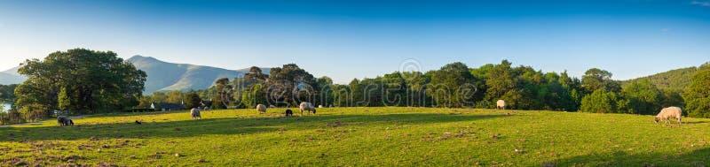 Paisagem, distrito do lago, Reino Unido fotografia de stock royalty free