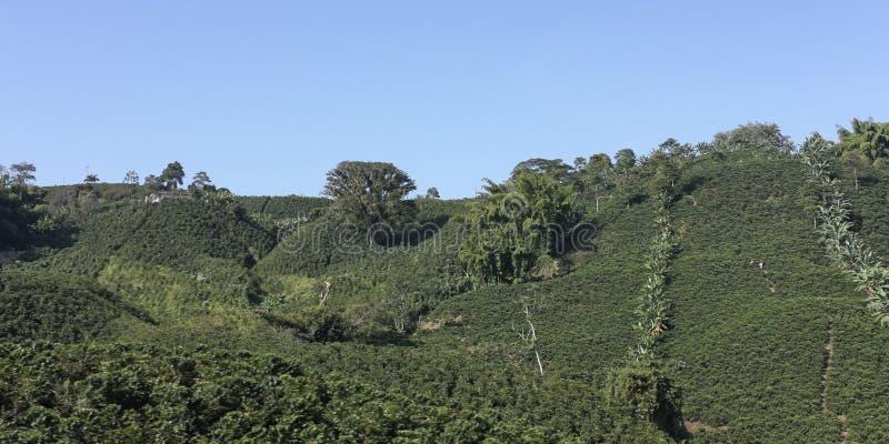 Paisagem do café, Colômbia imagens de stock royalty free