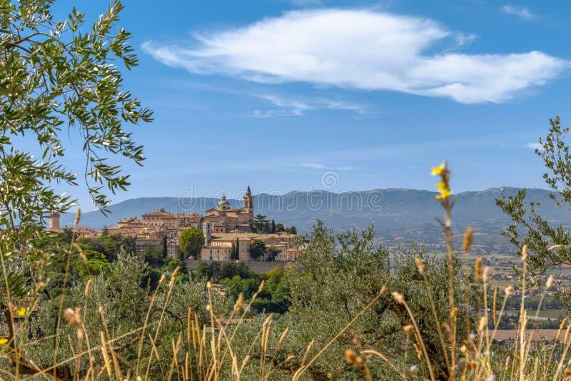 Paisagem do campo com o Trevi antigo da cidade do monte e verde-oliva foto de stock royalty free