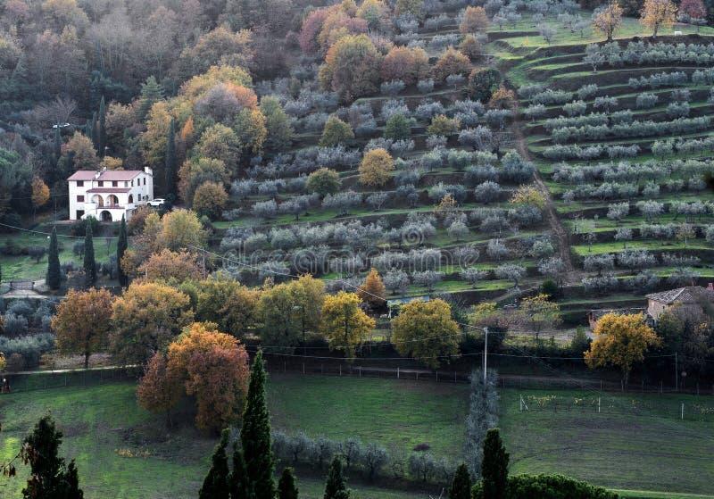 paisagem do campo de Arezzo com o terracing tradicional imagem de stock
