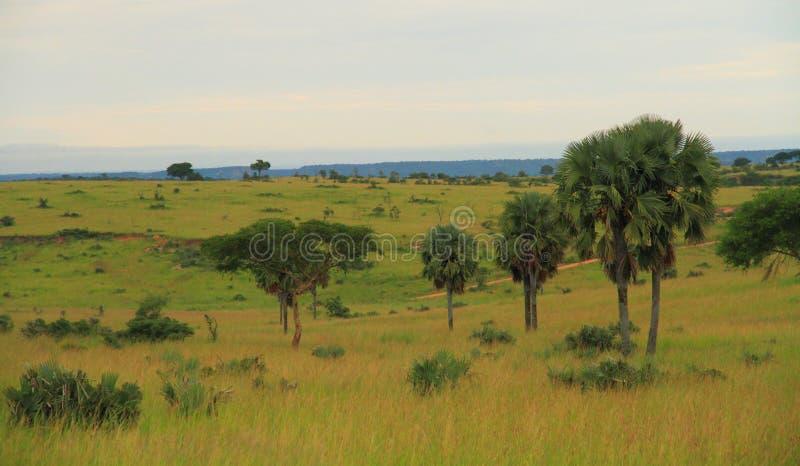 Paisagem do campo do Ugandan fotos de stock royalty free