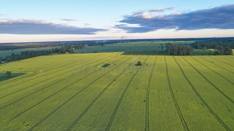 Paisagem do campo na vista aérea fotografia de stock
