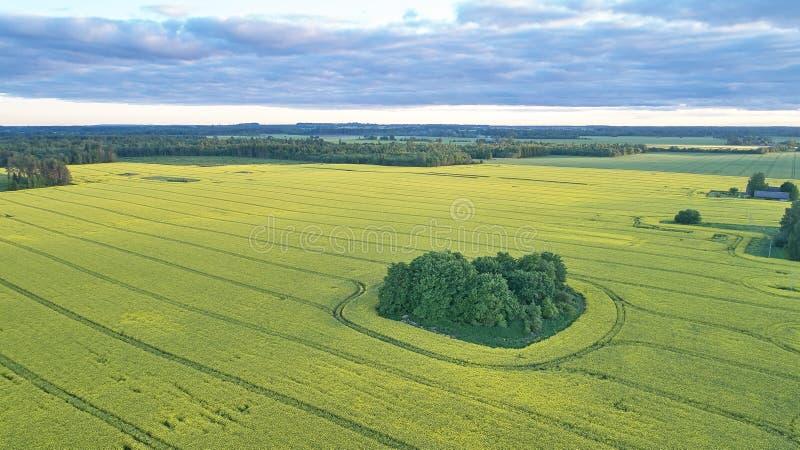 Paisagem do campo na vista aérea foto de stock