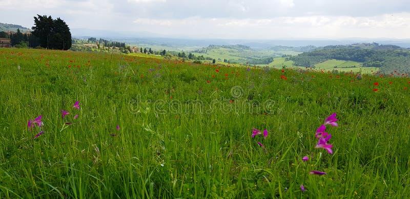 A paisagem do Chianti nos montes Tuscan fotografia de stock royalty free