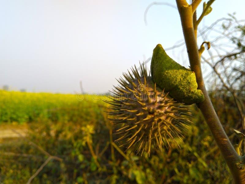 paisagem do close-up do fundo do verde amarelo fotos de stock