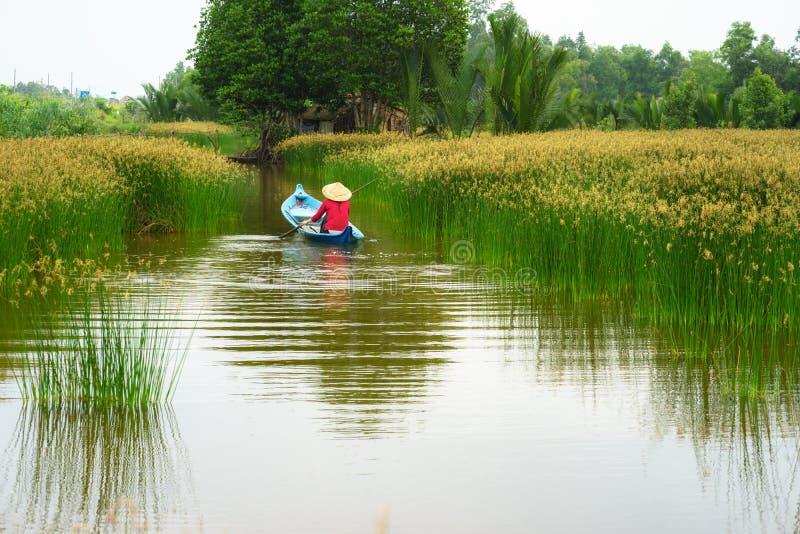 Paisagem do delta de Mekong com o barco de enfileiramento vietnamiano em Nang - tipo da mulher de campo da árvore da precipitação fotos de stock royalty free