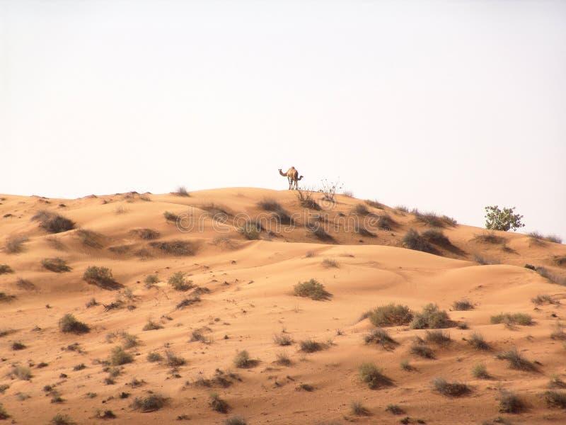 Download Paisagem do deserto foto de stock. Imagem de dunas, camelo - 200584
