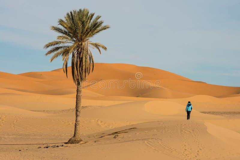 Paisagem do deserto com palma fotos de stock