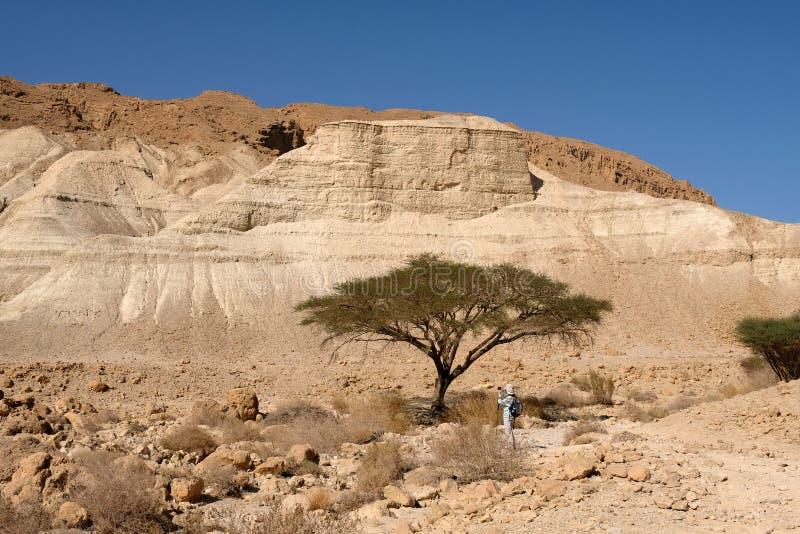 Paisagem do deserto de Judea foto de stock