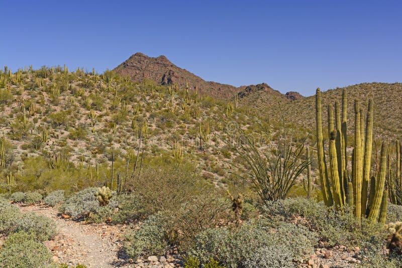 Paisagem do deserto na mola foto de stock royalty free