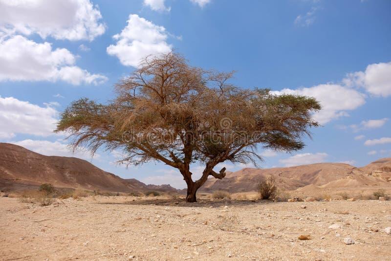 Paisagem do deserto do Negev fotografia de stock royalty free
