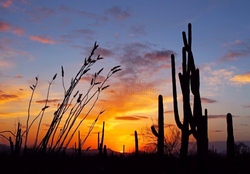 Paisagem do deserto no por do sol imagem de stock royalty free