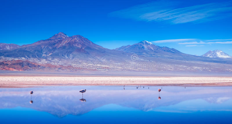 Paisagem do flamingo fotografia de stock royalty free