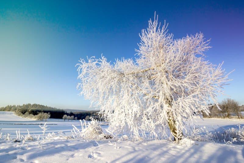 Paisagem do inverno Árvore e campo congelados fotografia de stock