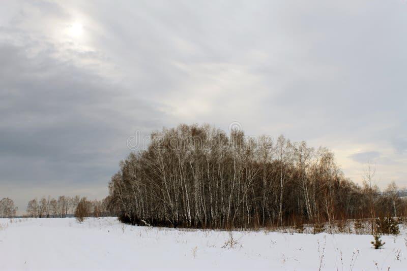 Paisagem do inverno - árvores gelados na estrada de floresta nevado em uma floresta maravilhosa do inverno imagens de stock royalty free