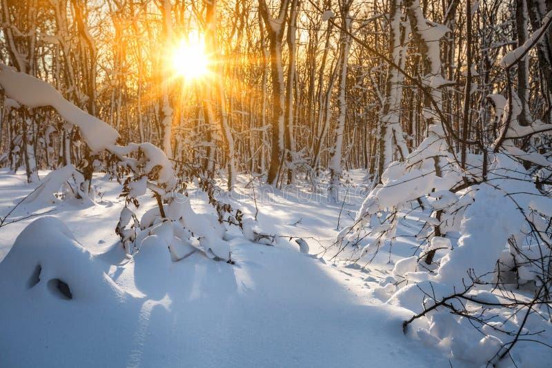 Paisagem do inverno - árvores gelados na floresta nevado dentro fotos de stock