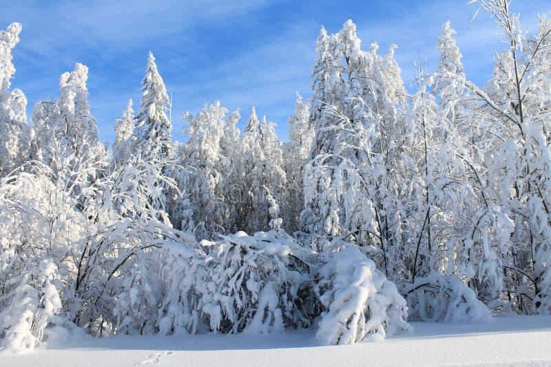 Paisagem do inverno - árvores na neve fotos de stock