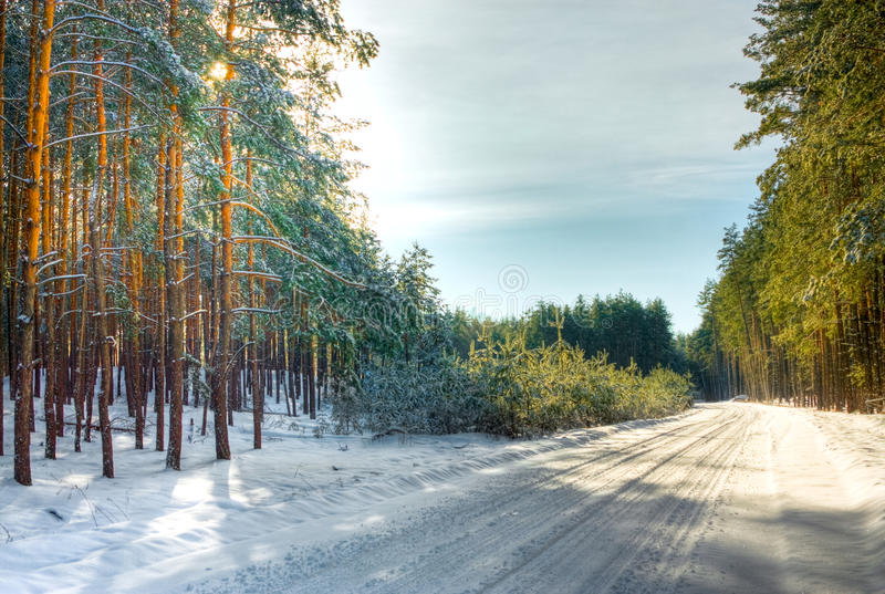 Download Paisagem do inverno imagem de stock. Imagem de vertical - 12800769