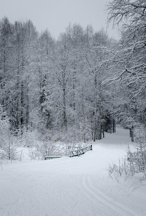 Paisagem do inverno fotografia de stock royalty free