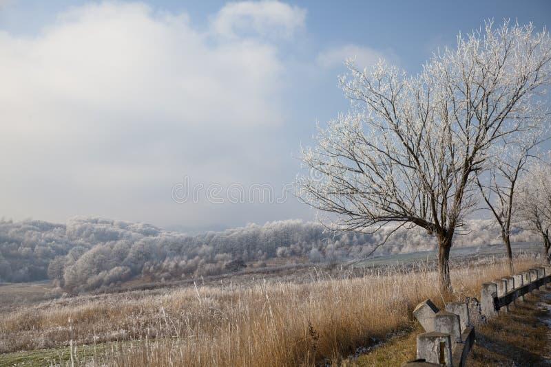 Paisagem do inverno foto de stock
