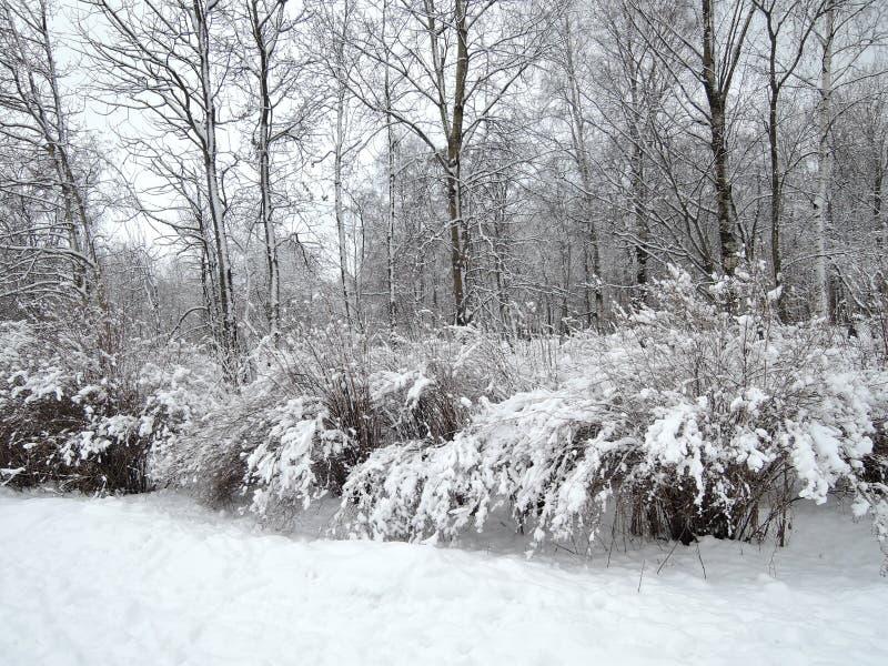 Paisagem do inverno após a queda de neve foto de stock royalty free